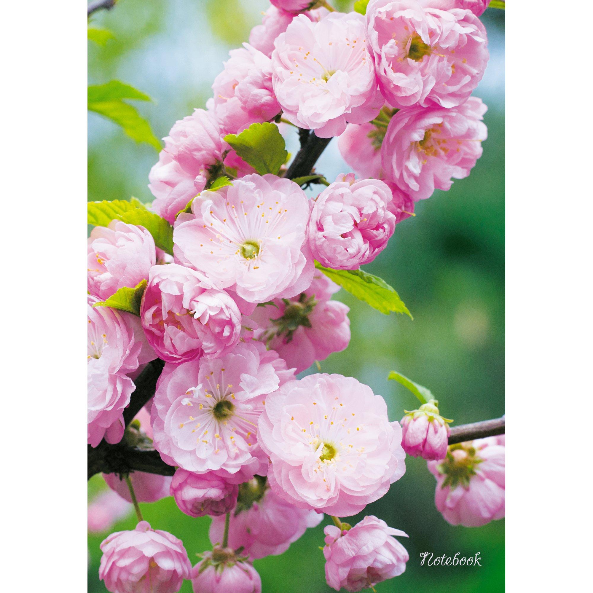 Весенний сад цена