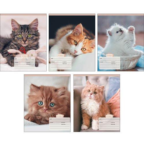Домашние любимцы (котята) цена и фото