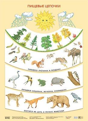 Николаева С. Н Пищевые цепочки (Плакаты)