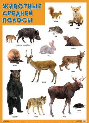 Развивающие плакаты. Животные средней полосы