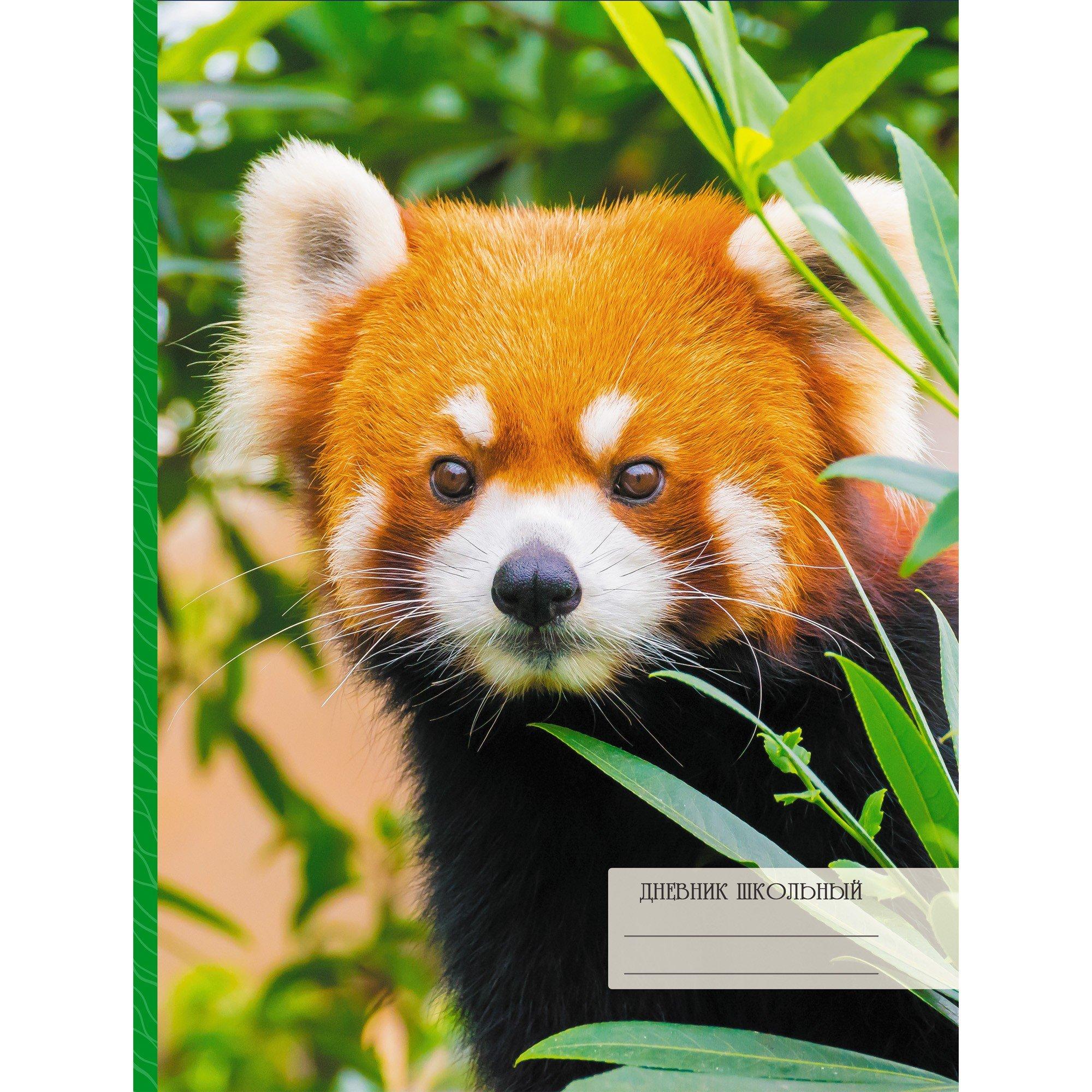 интересно Красная панда книга