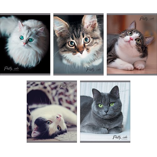 Фото - Кошачий взгляд 40л., 5 видов разноцветная серия текстуры 40л 5 видов