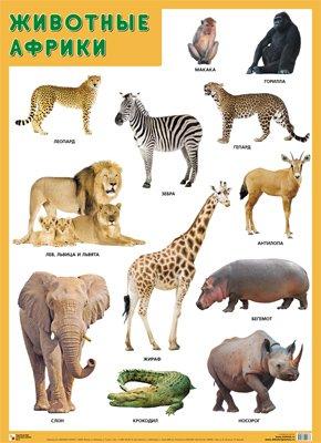Развивающие плакаты. Животные Африки