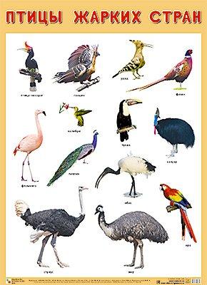 Развивающие плакаты. Птицы жарких стран