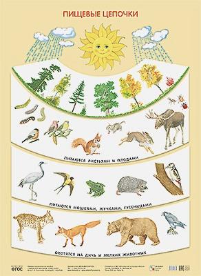 Николаева С. Н - Пищевые цепочки (Плакаты) обложка книги