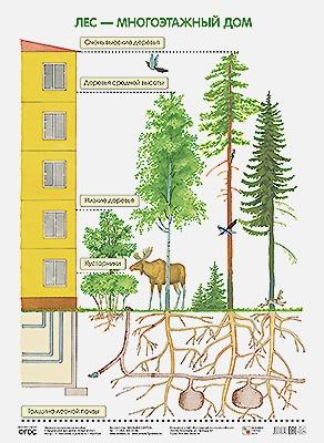 Николаева С. Н - ПЛ Лес — многоэтажный дом обложка книги