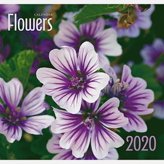 Фиолетовые цветы
