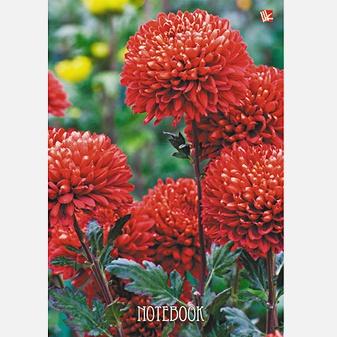 Цветы. Красные пионы 130л.