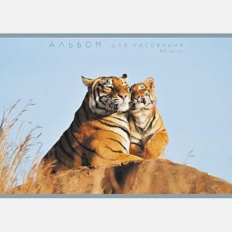 Нежность (тигры) (скрепка, 40л.)
