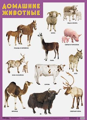 Нафиков Р. М. - Развивающие плакаты. Домашние животные обложка книги