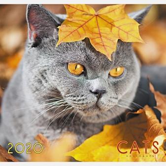 Домашние любимцы. Осенний кот