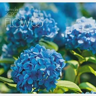 Цветы. Голубая гортензия