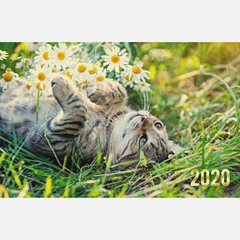 Домашние любимцы. Котик в цветах