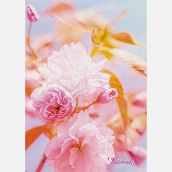 Природа. Цветы