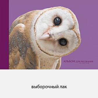 Любопытная сова (склейка, 40л.)