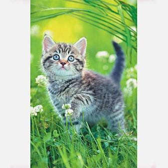 В мире животных. Милый котенок
