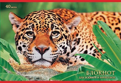 Леопард в джунглях