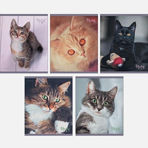 Тетрадь в клетку «Уютные коты», А5, 48 листов