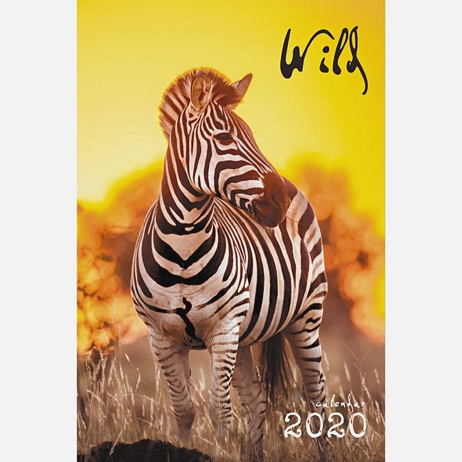 Дикие животные. Зебра