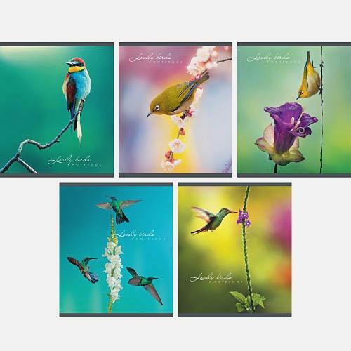 Мир птиц 96л.,5 видов