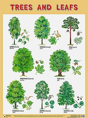 Плакаты (англ). Trees and Leafs (Деревья и листья)