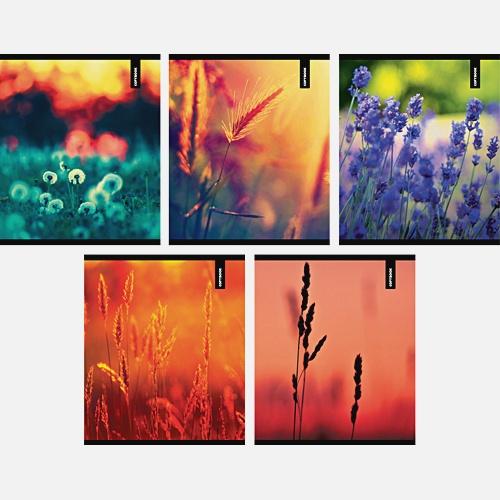 Цветущие поля 96л.,5 видов