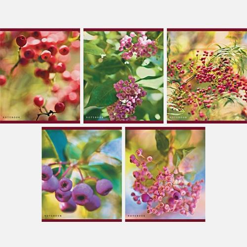 Удивительная природа (ягоды) 96л.,5 видов