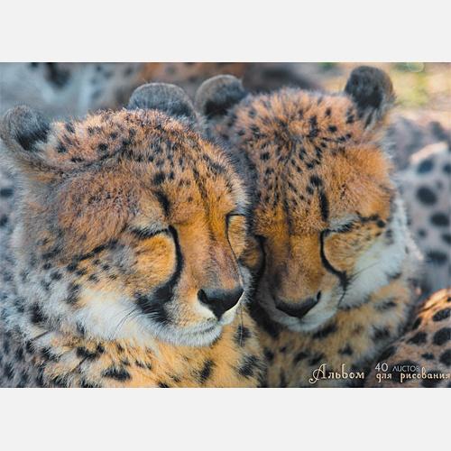 Два гепарда