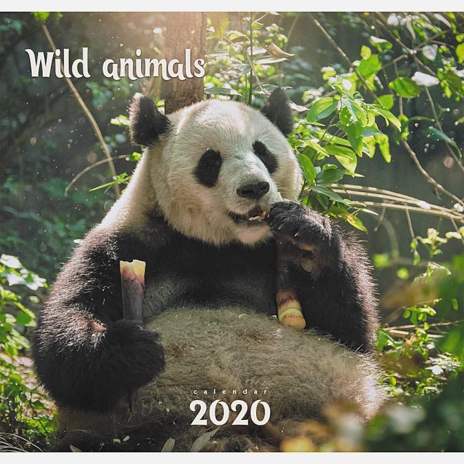 Дикие животные. Панда