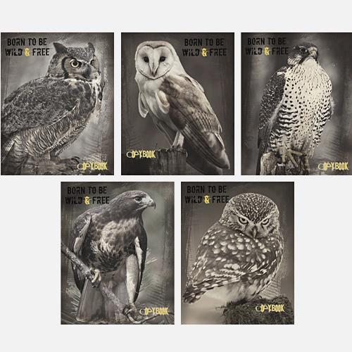 Дикая природа (птицы) 96л. (евроспираль), 5 видов