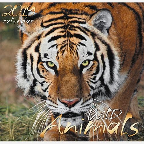 Дикие животные. Тигр