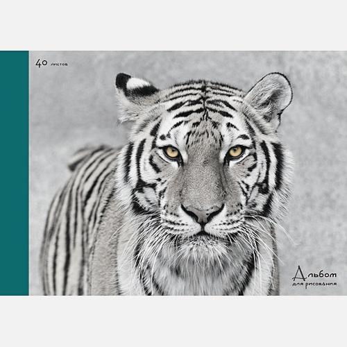 Величественный тигр (склейка, 40л.)