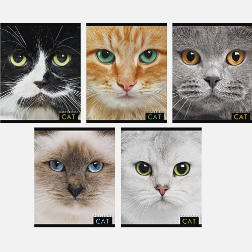 Кошачий взгляд 48л., 5 видов