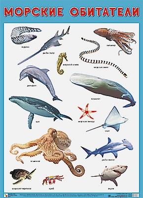 Нафиков Р. М. - Развивающие плакаты. Морские обитатели обложка книги