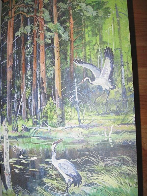 картинки леса и его обитателей в повести