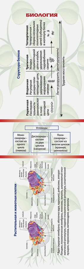 Закладка. Биология
