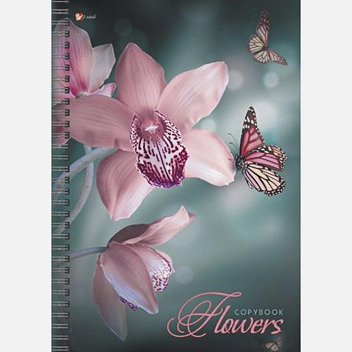 Цветы. Прекрасные орхидеи