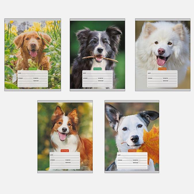 Портреты собачек