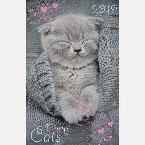 Домашние любимцы. Спящий котенок
