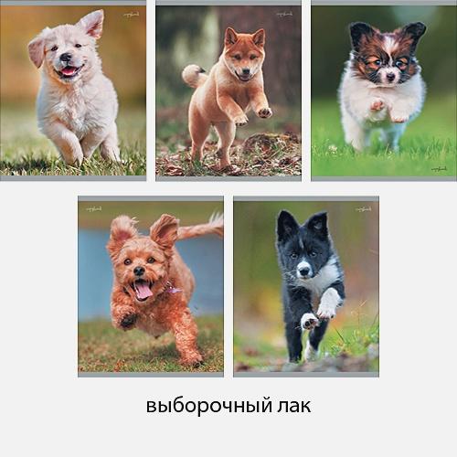 Радостные щенки 48л., 5 видов