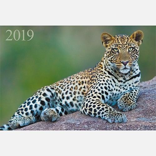 Дикие животные. Изящный леопард