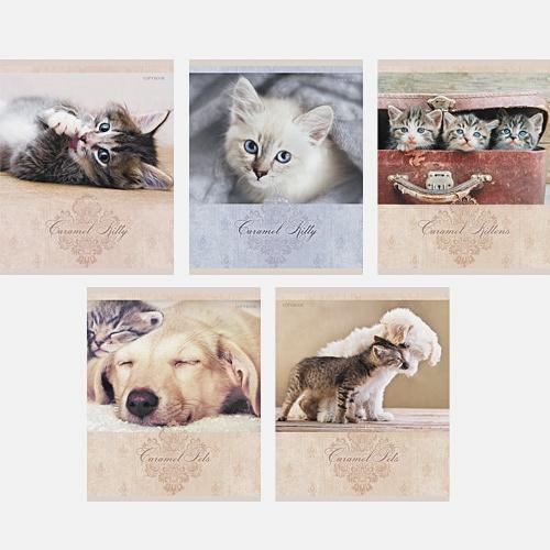 Милые моменты (котята и щенки) 48л., 5 видов