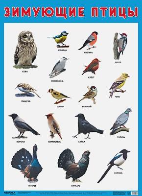 Нафиков Р. М. - Развивающие плакаты. Зимующие птицы обложка книги