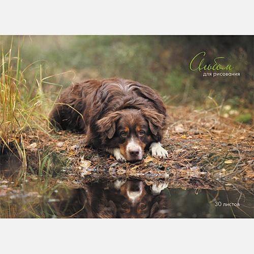 Пес у озера